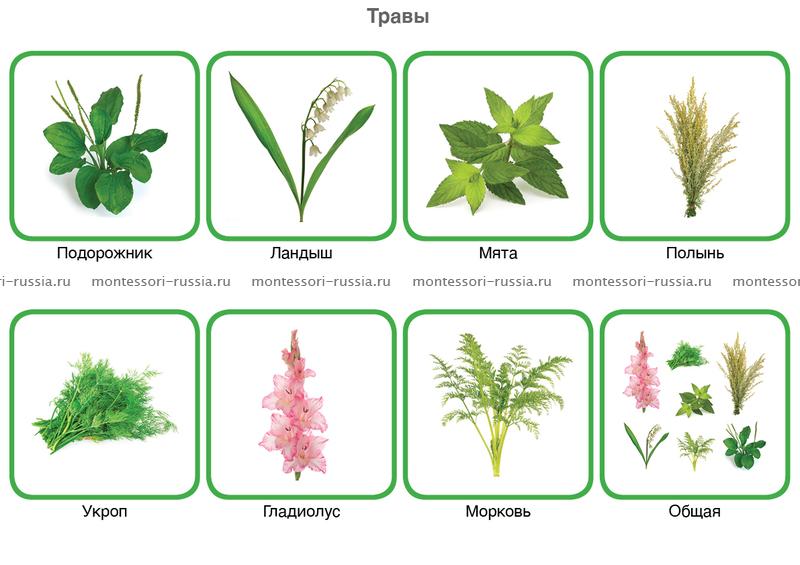 Скачать книгу у.пратов а.тухтаев ф.азимова ботаника 5 класса